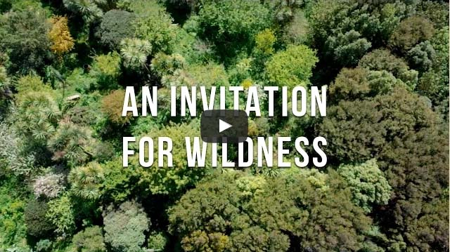 an-invitation-for-wildness