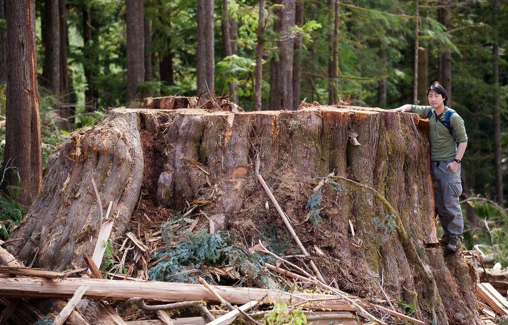 ken-wu-big-stump-port-renfrew