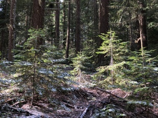 Old-growth ecosystem.